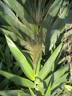 Immagine dell'erba amliso